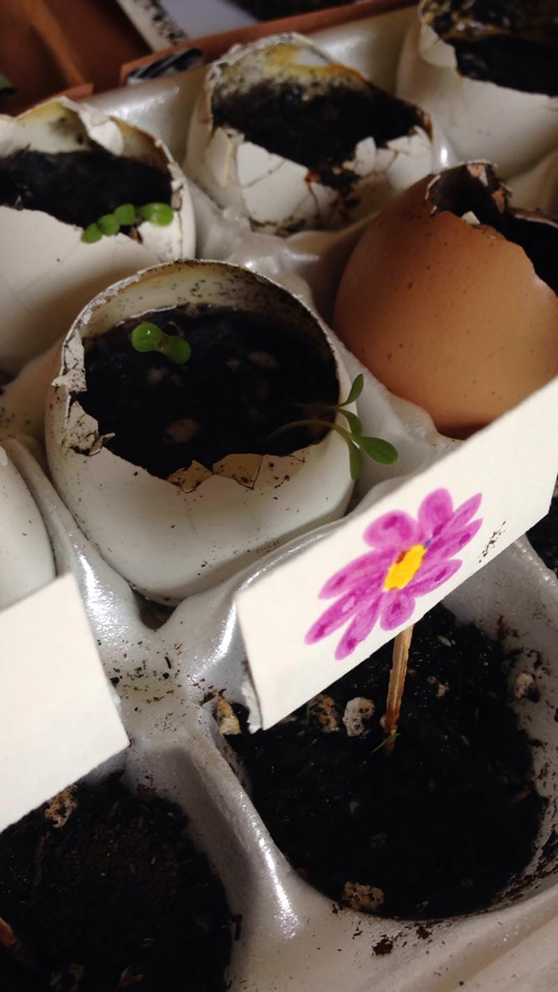 Egg crate update